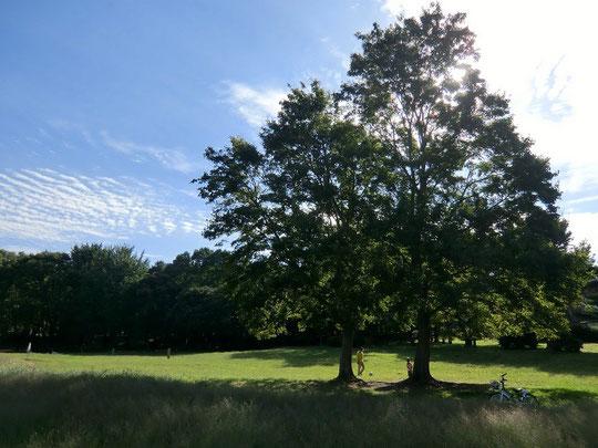 10月16日(2012) 木の下の親子(武蔵野公園のくじら山近く:小金井市) 10月13日撮影