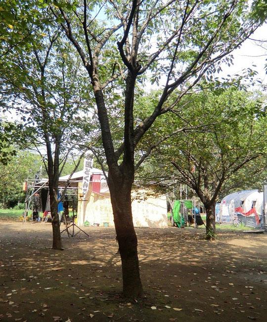 9月13日(2013) 森の劇団(劇団どくんごの公演場所:井の頭公園)