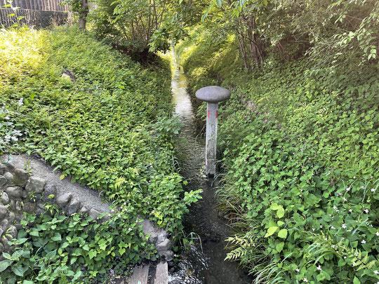 5月23日(2019) 5月の公園:プラタナスの木の近くの原っぱにシロツメグサが群生していました。別名をクローバー、馬肥(うまごやし)とも言います。ヨーロッパが原産、牧草として輸入されたようです。葉っぱが4枚のものは幸運のシンボルですね。