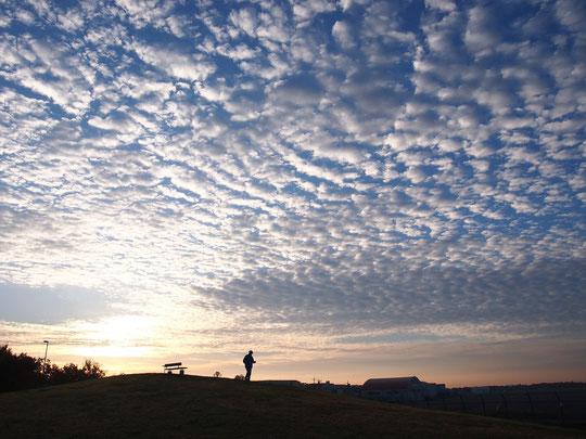 11月22日(2014) 朝日と鰯雲:調布飛行場と隣り合わせになっている武蔵野の森公園。飛行場の東から朝日が昇り、空一面の鰯雲を照らしています(展望の丘の近くにて)