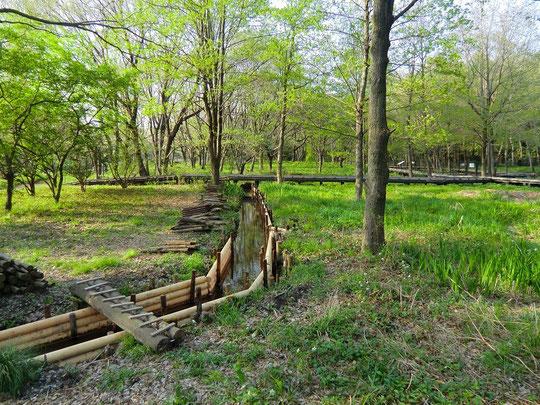 ●湧き水の水路(野川公園・自然観察園)
