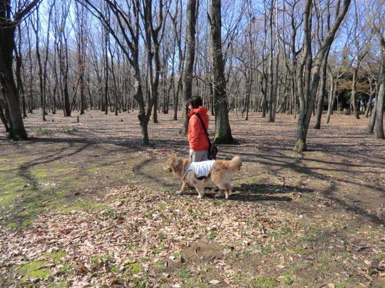 愛犬とお散歩の佐藤さん。わんちゃんのお口にはボールが。とても賢そうなわんちゃんでした