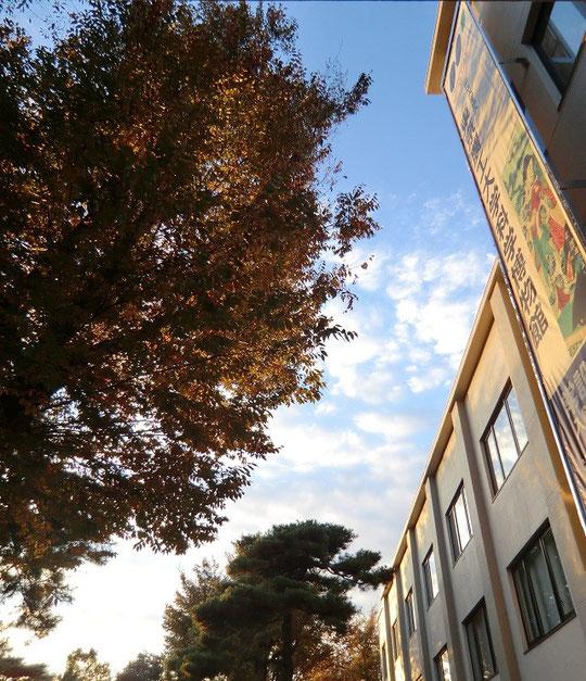 11月17日(2013) 東京農工大科学博物館(繊維博物館)