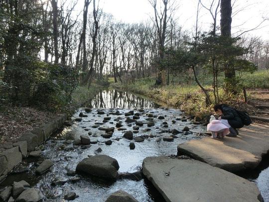2月28日(2016) せせらぎの小径:2月27日、神代植物公園内の小川に沿って散策できるせせらぎの小径にて