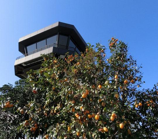10月19日(2014) 柿の木と管制塔:調布飛行場まつりにて