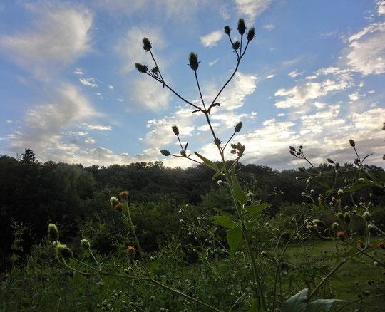10月15日(2014) 吾亦紅(ワレモコウ)と秋の空:野川遊歩道から国分寺崖線を望む場所で