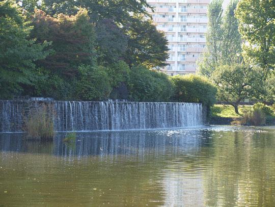 9月29日(金)都会の森の滝:都立武蔵国分寺公園内の武蔵の池にある「扇の滝」。公園の木々の向こうにJR西国分寺駅近くの高層住宅が林立して見える場所です。