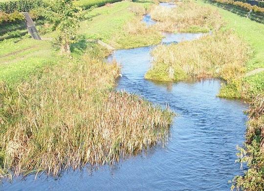 10月26日(2014) 野川の流れ(羽沢橋の上から)