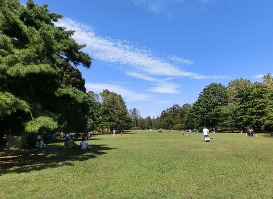 10月7日(2018)秋空の公園:都立野川公園大芝生広場。野川公園は、近隣の公園なども含めた「武蔵野の森構想」のもとにつくられた公園。もとは国際基督教大学のゴルフ場や牧場があったそうです。