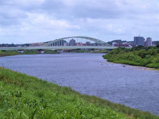 7月26日(2020) つかの間の青空:連日の雨が続いております。そんな中、まるで白日夢のように(ほんの1時間足らず)青空に出逢いました。武蔵野の森公園の展望の丘にて