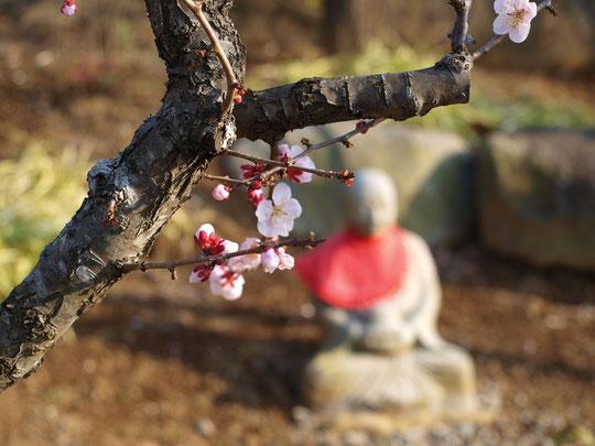 2月29日(2016) 梅の木とお地蔵さま:2月27日、深大寺の墓所の近くにて