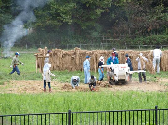10月13日(2018) 脱穀作業(大沢たんぼ):三鷹市内に残る貴重な里山風景、大沢の里で脱穀作業が行われていました。小中学生が田植えや稲刈りをしたものの仕上げですね。