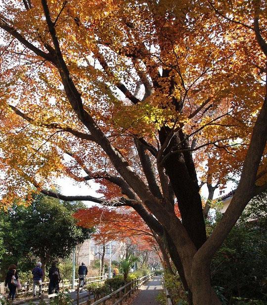 12月14日(2012) 紅葉の道(多摩湖自転車・歩行者道:小平市)