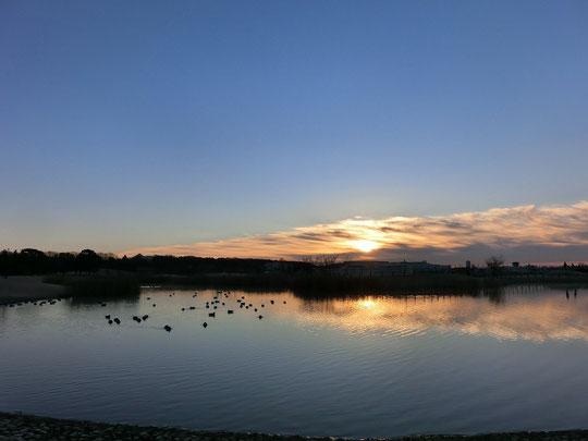 2013年1月1日 初日の出(武蔵野の森公園・修景池)