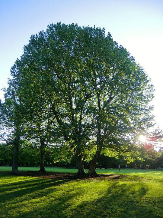 新緑のころ、朝日を受けて