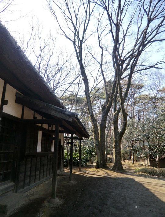 3月8日(2013) 武蔵野の面影:江戸東京たてもの園の天明家(農家)
