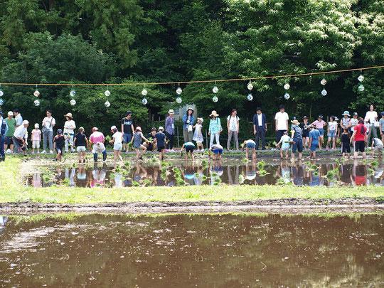 6月2日(2018) ほたるの里の田植え:三鷹市にある大沢田んぼでは、子ども達による田植え体験が行われていました。東京で田植えが出来る貴重な場所ですね。