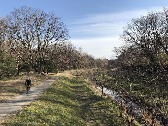 2月14日(2019)冬晴れの野川遊歩道:新緑や紅葉の野川遊歩道も美しいですが、冬の野川遊歩道は国分寺崖線の森のかたちと川の流れが明瞭で絵になります。野川が蛇行しているのもいいですね。野川公園のなら橋の上から