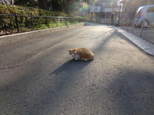 自転車で出発したところ、最初にネコちゃんが待ち構えていた