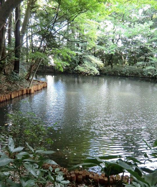 9月5日(2013) 沼のような池(滄浪泉園:小金井市)