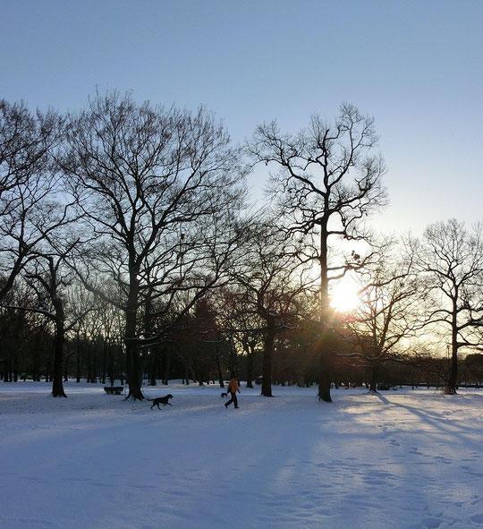 1月15日(2013) 雪の日の朝(喜んでいるようなワンちゃん:野川公園)