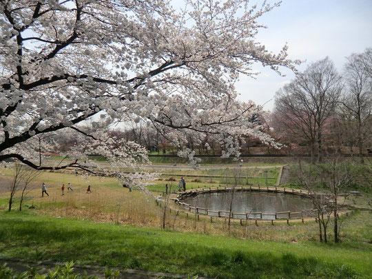 釣ができる池の近くも桜が満開でした。春のうららかな日、子どもたちも楽しく遊んでいました