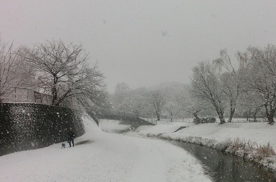 2013年1月14日 雪が降りつもる野川遊歩道
