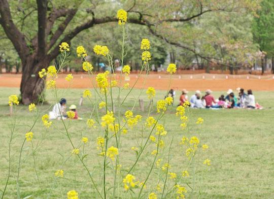 ●武蔵野中央公園です。ちょうどお昼時で、広いはらっぱで野外ランチを楽しむ人たちがいました。
