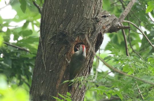 ●ドリルが無くても立派な巣が完成。いきものの営みは偉大なものですね。