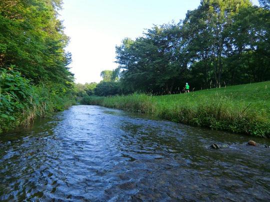 ▲野川の中から。比較的水量が多い日