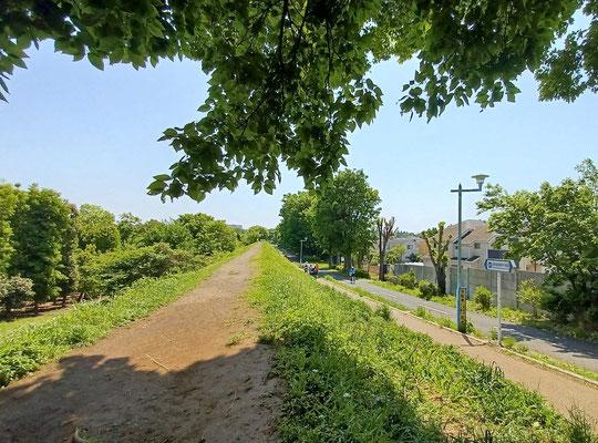 5月3日(2020) 朝焼けの空:運動不足解消も兼ねて早朝散歩をしていると、東のほうの空が赤のグラデーションできれいでした。東八道路からICUの森を見たところです