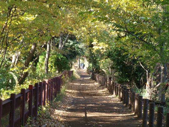 11月17日(2017)木漏れ日のトンネル:玉川上水緑道の小川水衛所跡近くにて(小平市)。東京にいることをしばし忘れてしまう散歩道です。近くには平櫛田中彫刻美術館も。