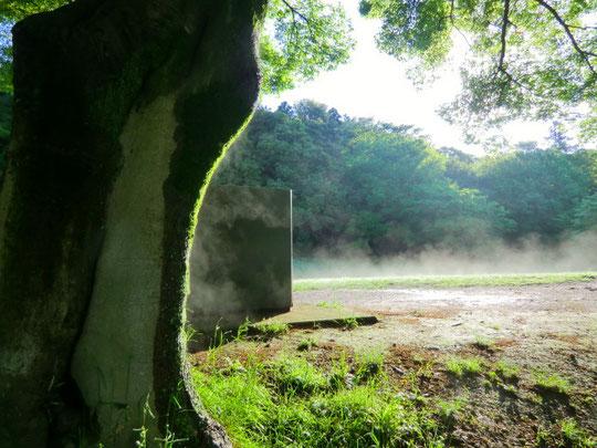辺りにも靄が立ちこめていた。木から地面から昨夜の雨による水分が蒸発している。ちょっと幻想的