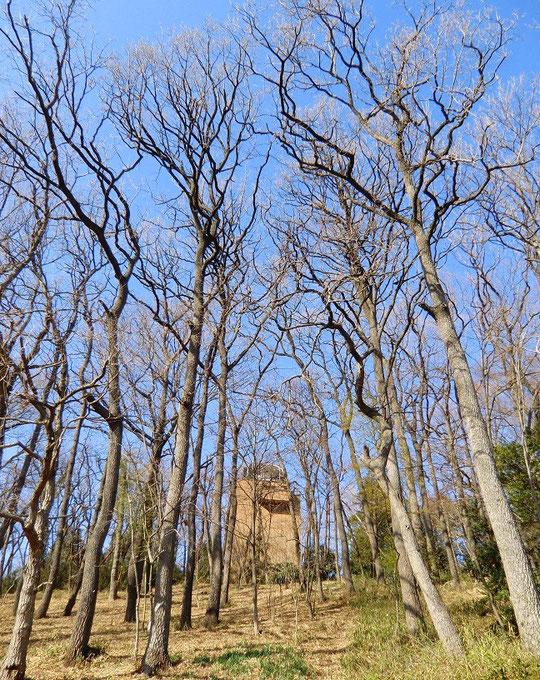 3月11日(2013) 冬木立とアインシュタイン塔:国分寺崖線の下から国立天文台のアインシュタイン塔(太陽分光写真儀室)を見上げる