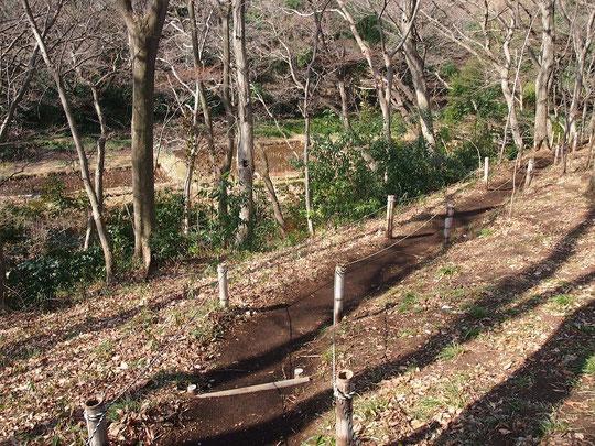 2月20日(2016) 雑木林の道:2月17日、都立農業高校の神代農場(調布市)にて。神代農場は、原則として木曜日が一般公開日になっています。雑木林の斜面の下には、湧水を利用した田んぼがあります