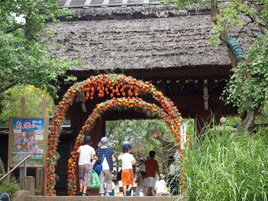 7月22日(2018)ほおずきのゲート:武蔵野地域も炎暑の日々。深大寺では夏の風物詩、鬼灯まつりが行われていました。山門の前に飾られたほおずきの輪の赤が鮮やか。