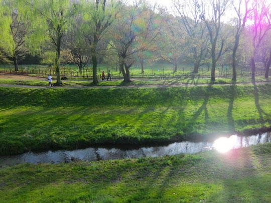 野川に朝日が反射していた