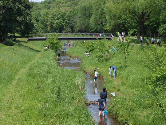 5月1日(2016) 野川で川遊び:ゴールデンウィークの野川遊歩道は、とてもにぎわっていました