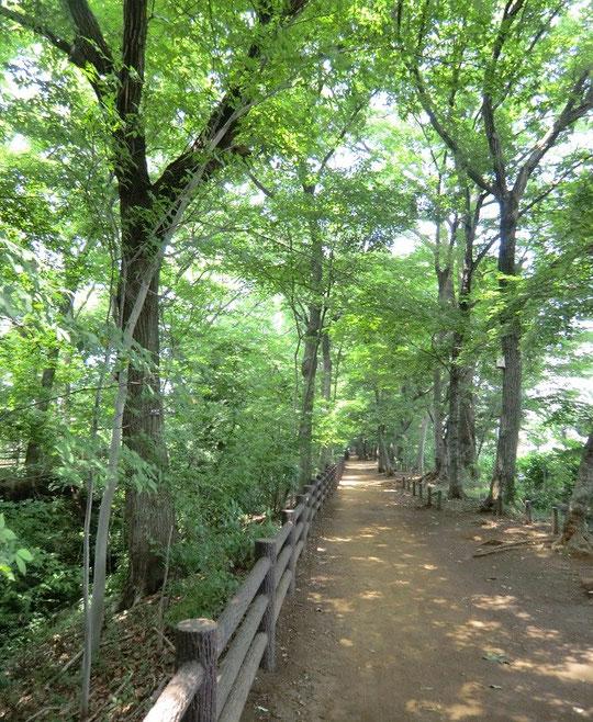 7月17日(2014) 玉川上水緑道:鎌倉橋の近く(小平市)