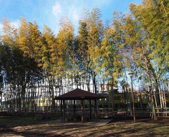 2月6日(2015) 竹林と西武新宿線:たけのこ公園(小平市)にて