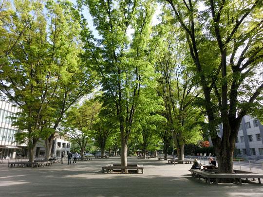 ●写真の右手の建物1階にノートカフェ(note cafe)があります。大きなケヤキの木がある場所はウッドデッキになっていて、学生や地域の方の憩いの空間になっています。
