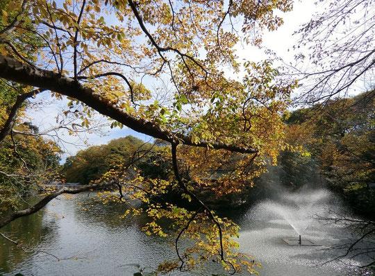 11月18日(2012) 木々と噴水(井の頭公園)11月15日撮影