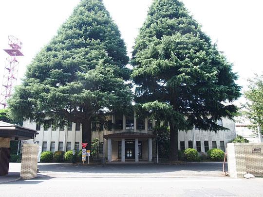 7月21日(2015)ヒマヤラ杉と歴史のある建物:1938年に日本無線三鷹製作所が建てられた時に植えられた2本のヒマヤラ杉