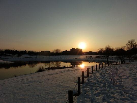 1月21日(2013) 東京外国語大学に沈む夕陽(武蔵野の森公園で1月16日に撮影)