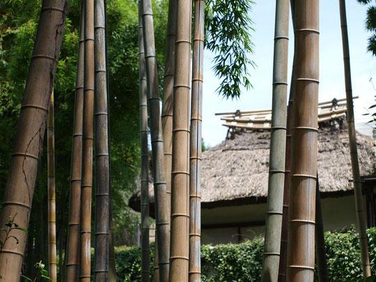 7月11日(2016) 念仏坂から 念仏坂:小金井市の国分寺崖線(はけ)にある坂のひとつ。竹林の向うに見えるのは、レストラン寺子屋さんの日本庭園にある茶室「清漣亭」です