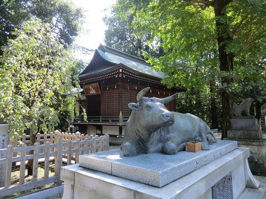 10月7日(2012) 布多天神社御神牛(調布市)