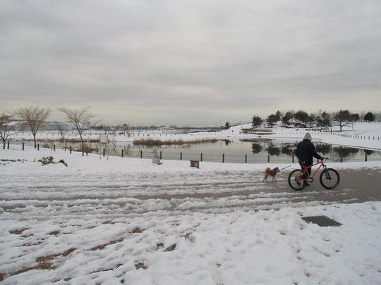 1月17日(2013) 雪の公園(武蔵野の森公園修景池近くで1月16日に撮影))