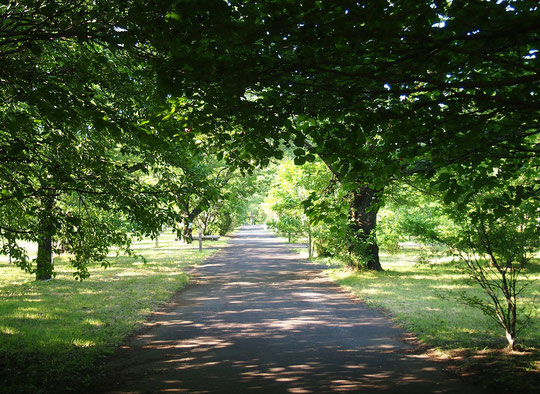 5月18日(2016) 新緑の苗圃(びょうほ):都立武蔵野公園の苗圃にて。武蔵野公園には、都内の公園や街路樹に植えられる苗木を育てる苗圃があり、散策も楽しめます