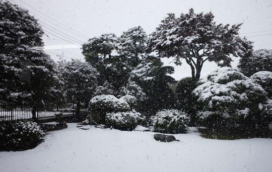 平成28年11月24日の大雪です