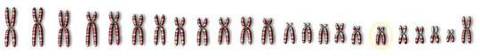 46 Chromosomen